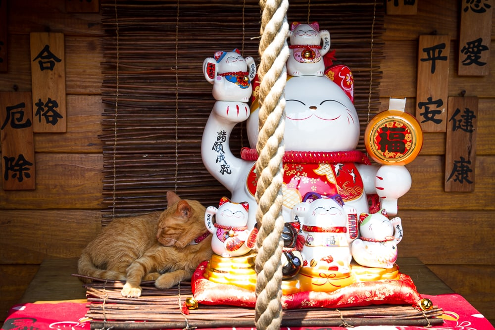 Wondering what to do in Taiwan? How about the Houtong Cat Village?