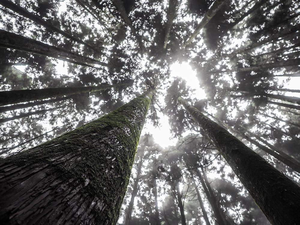 Beautiful forests in Alishan