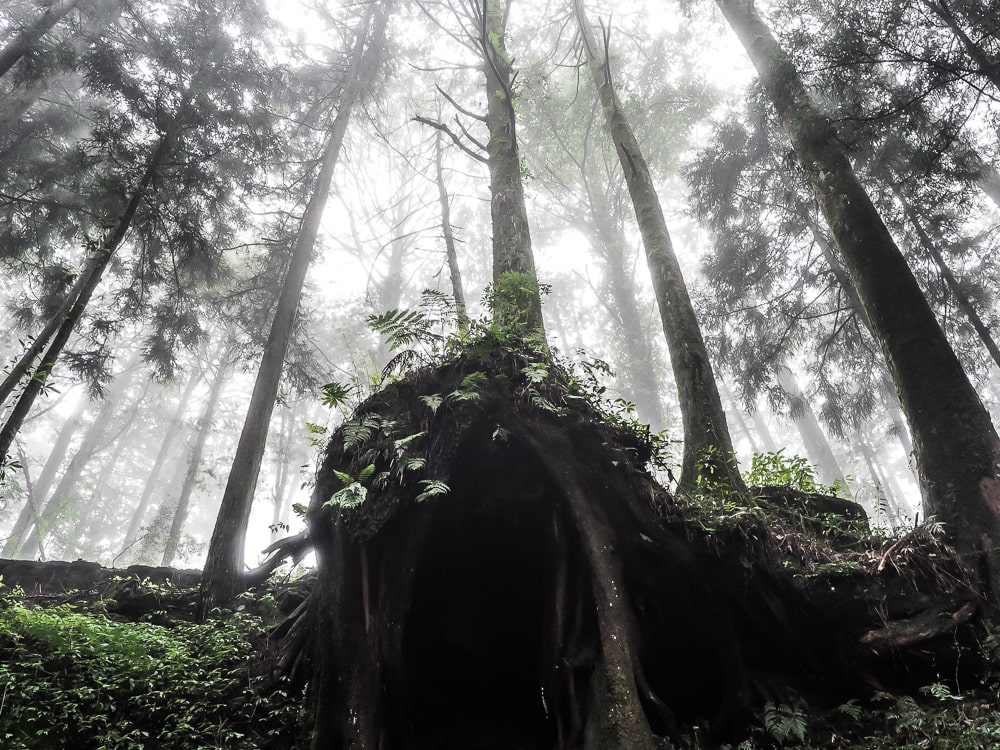 Misty forests in Alishan National Scenic Area, Taiwan