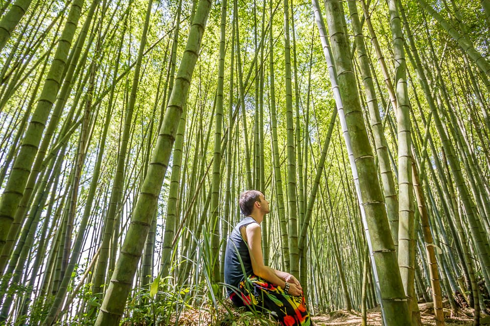 Bamboo forest on the Ruitai Historic Trail near Fenqihu, Taiwan