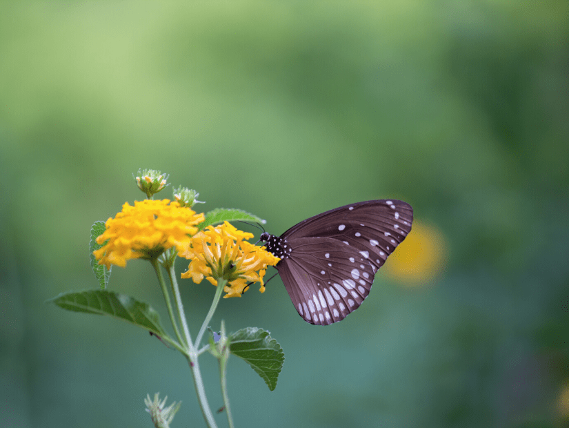 Butterfly at Butterfly Valley in Kaohsiung and Pingtung